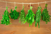 Fresh Herbs Collection / Vintage Style — Stock Photo