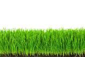 πράσινο γρασίδι με γόνιμο χώμα και σταγόνες δροσιάς — Φωτογραφία Αρχείου
