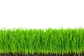 Green Grass with Fertile Soil and Drops Dew — Stock Photo