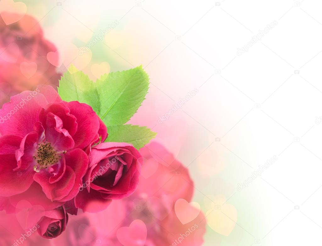 Valentine's Day or Wedding Card Background - Beautiful Roses and Soft Hearts  Stock Photo #19688909