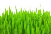 Färska gröna vetegräs med droppar och bokeh - isolerade — Stockfoto