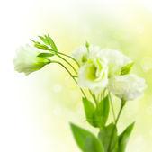 多重背景の芽と白い花の束 — ストック写真