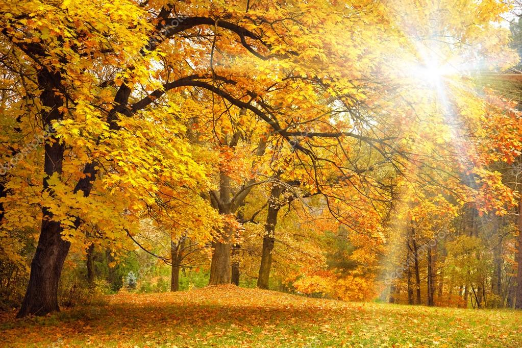 Фотообои Gold Autumn with sunlight - Beautiful Trees in the forest
