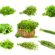 Stock Photo: Big Set of Bunches and Basket of fresh Spice Herbs - isolated