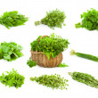 Big Set of Bunches and Basket of fresh Spice Herbs - isolated — Stock Photo