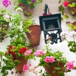 Flowerpots and red flower on a white wall with vintage lantern. — Stock Photo