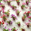 Flowerpots and colorful flower on a white wall, Old European to — Stock Photo
