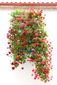 Typical Window decorated Pink and Red Flowers, Mediterranean Eur — Stock Photo