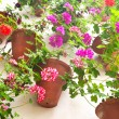 Flowerpots and colorful flower on a white wall with copy space f — Stock Photo