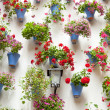 Blue Flowerpots and Red Flowers on a white wall with vintage lan — Stock Photo