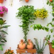 Cordoba Patio Fest - Private Courtyard with Flowers decorated , — Stock Photo