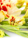 Red and yellow bright gladiolus - vertical — 图库照片