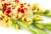 Beautiful red and white gladiolus isolated - horizontal — Stock Photo