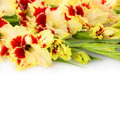 Beautiful fresh gladiolus isolated on white  background — Stock Photo