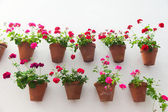 Flowerpots and red flower on a white wall with copy space for te — Stock Photo