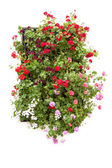 Typical Window decorated Pink and Red Flowers, Spain, Europe — Stockfoto