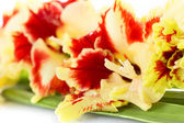 Bright red and yellow gladiolus - horizontal — Stock Photo