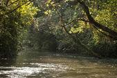 Iguazu River, Misiones, Argentina — Stock Photo