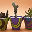 Cactus in pots — Stock Photo
