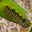 Caterpillar — Stock Photo