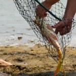 Fish catch — Stock Photo #51035985