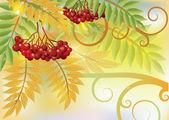 Autumn card with red rowan berry, vector illustration — Stock Vector