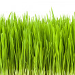 Lush grass — Stock Photo #16800733