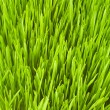 Lush grass — Stock Photo #16800737