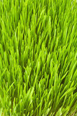 Lush grass — Stock Photo