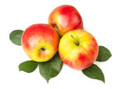 Apples on leaves — Stock Photo