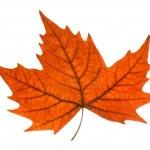 Leaf autumn — Stock Photo