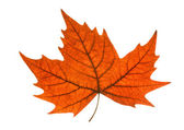 Leaf autumn — Stock Photo