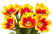 Tulips bloom bouquet — Stock Photo