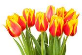 Kytice tulipánů — Stock fotografie
