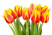 チューリップ花束 — ストック写真