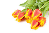 Tulips bouquet lay — Stock Photo