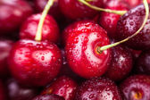 Cherry macro — Stock Photo