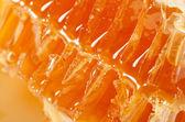 Honeycomb macro — Stock Photo