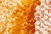 Honingraat macro — Stockfoto