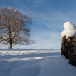 Lone tree against a winter setting — Stock Photo