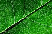 Gros plan des feuilles vert vif — Photo