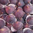 Ripe plums — Stock Photo