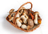 Mushrooms in basket — Stock Photo