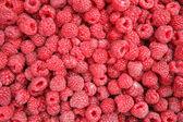 Raspberry — Foto de Stock
