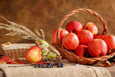 Harvesting and storing apples — Stock Photo