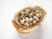 Basket of quail eggs — Stock Photo