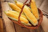 Ear of corn, revealing yellow kernels — Stock Photo