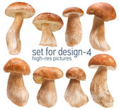 Mushroom Boletus — Foto Stock
