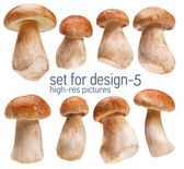 Ceps — Stock Photo