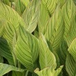 Large green leafs — Stock Photo